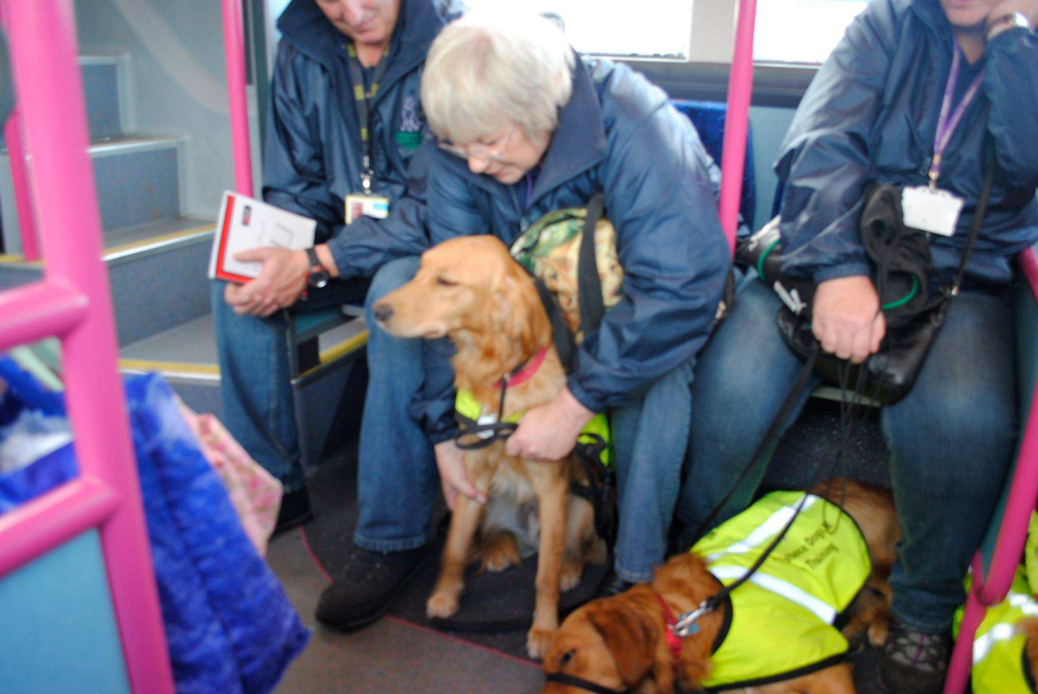 Assistance Dogs NI