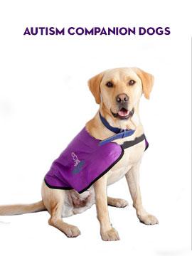 Autism Companion Dogs
